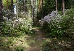 Május - kötelező kirándulás a Jeli Arborétumba
