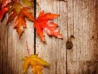 Őszi versfolyam – szépirodalmi pályázat