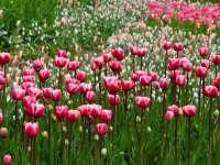 Tavaszi viráglesen - 5+1 virágbontó hely, amit látnod kell
